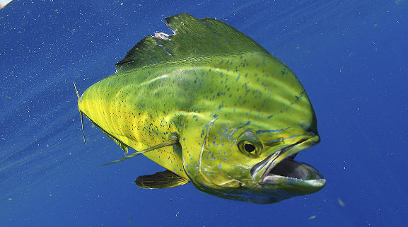 First Strike Charters - Fish and reel in a prize catch